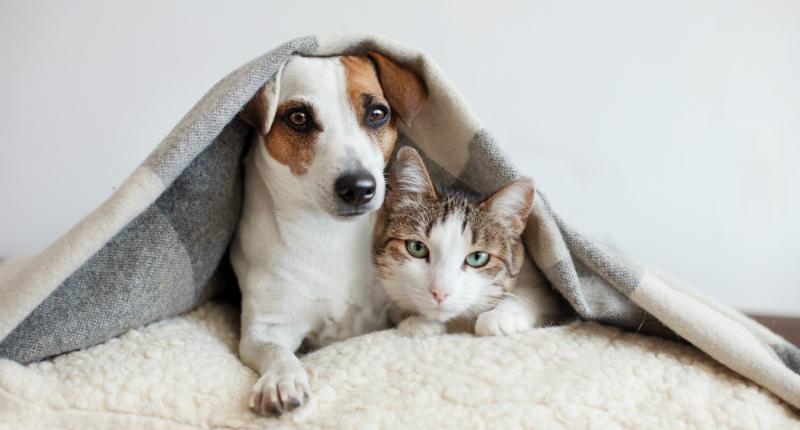 Huisbezoek hond kat