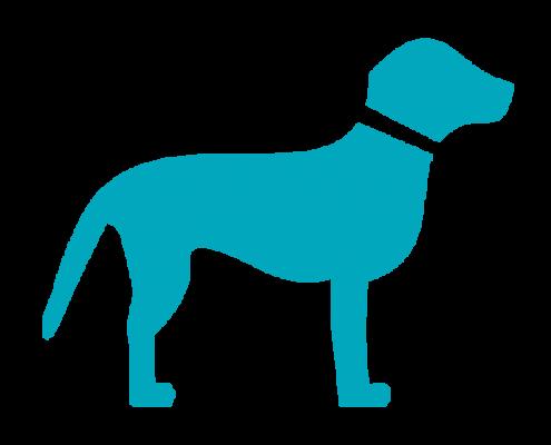Hond Ziek Dierenarts