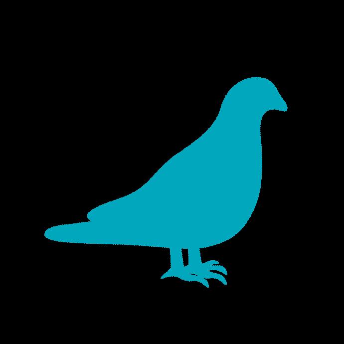 Vogel Kip Duif Dierenarts